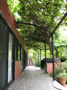 Vine-covered-nth-pergola-(2)