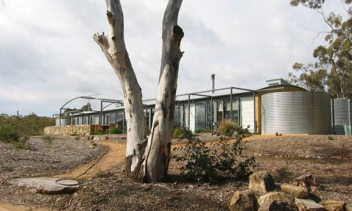 04 - Strine Design - Strine Environments - Wamboin House - Solstice House - gum tree