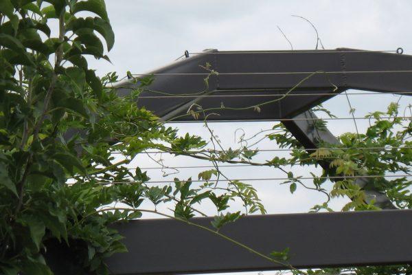 22 - eHouse - watson - Strine Design - Strine Environments - Best Canberra Builder - Green Architect Canberra - Sustainable