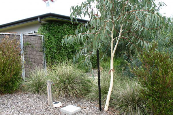 23 - eHouse - watson - Strine Design - Strine Environments - Best Canberra Builder - Green Architect Canberra - Sustainable