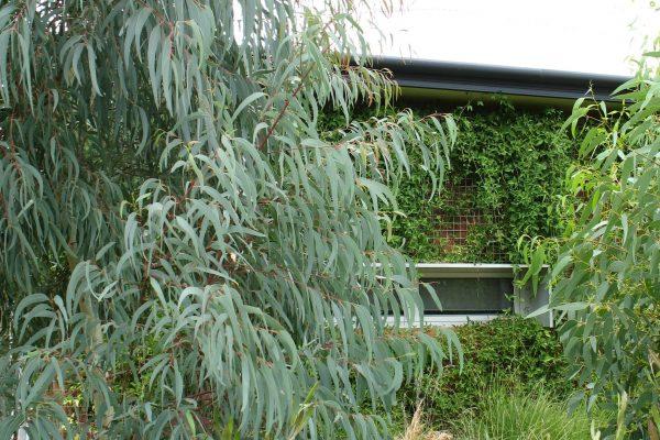 25 - eHouse - watson - Strine Design - Strine Environments - Best Canberra Builder - Green Architect Canberra - Sustainable